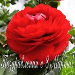 ロシア人女性に花を贈るときの6つのヒント via RUSSIA BEYOND