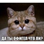 ロシア語のスラング Офигел/ офигела 😱