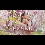 Yaezakura – думаю о далекой памяти, на весеннем ветру-