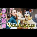 Город кошек в Токио – Янака Гинза