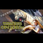 В поисках белого тигра в японском зоопарке