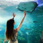 いろんな海の生き物🐢🐙🦑🦐🦀🐬🐠🐟