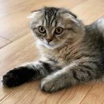 私は猫を買いました。🐈